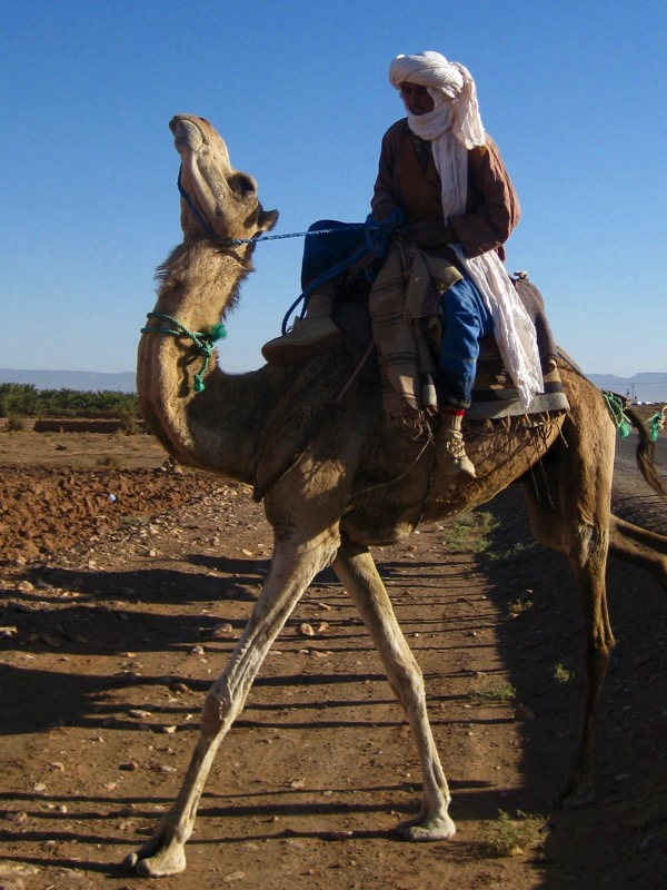 Berber on camel Morocco
